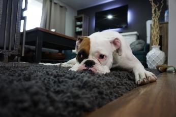 Může pes pomáhat se zvládáním emocí během mediace?